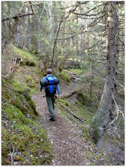 På vei mot St. Olavsspranget gjennom tett skog.