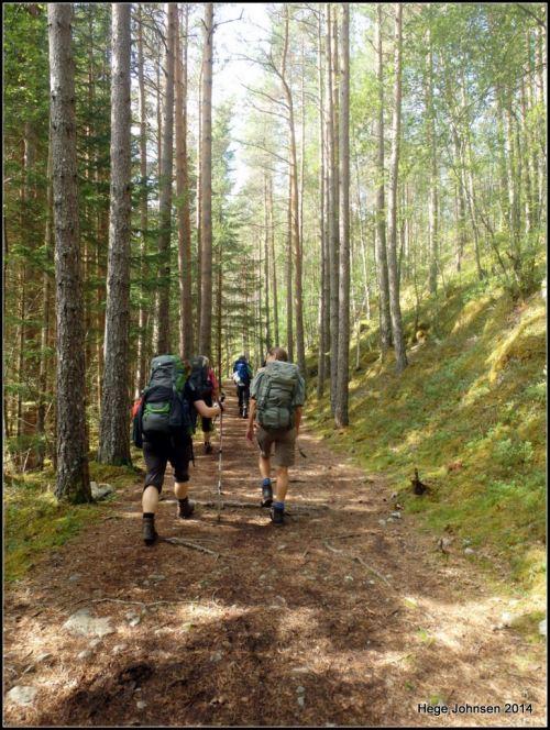 Skogtur etter mange dager på fjellet.