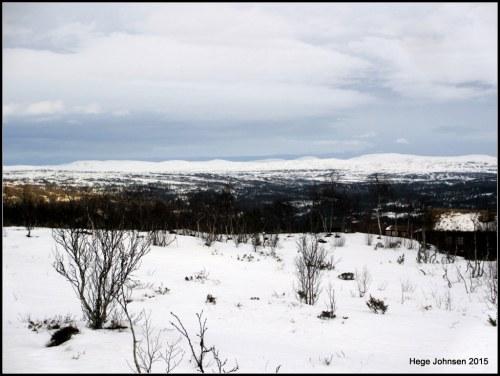 Utsikt i hyttefeltet mot øst.