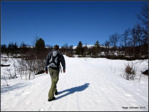 Rester av vinterens skiløype lever farlig i vårsola.